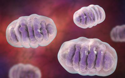 Mitochondria: The Key to Reversing Disease and Aging?