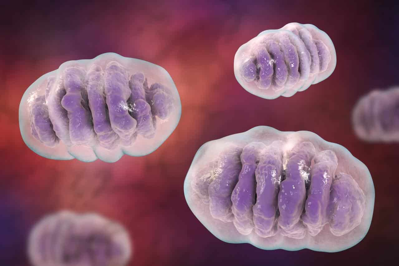 Mitochondria: The Key to Reversing Disease and Aging